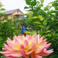 Бабушка Маша на цветке :: Инна Буяновская