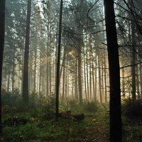 Утренний лес :: Yuriy Kuzmič