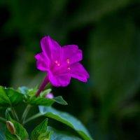цветик :: Анна Перова