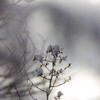 Ещё не зима :: dmitriy-vdv