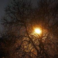 осень,вечер,дождь, :: Геннадий Свистов