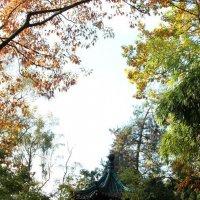 Pagoda :: Zlata Charskaya