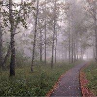 Аллея в осенний туман :: Николай Белавин