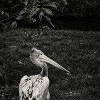 Птиц :: Ксения Базарова