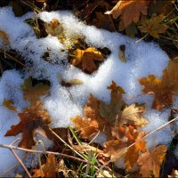 Ох, как зима нетерпелива, она подкралась в октябре. :: Anna Gornostayeva