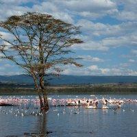 Розовый фламинго - дитя заката :: Елизавета Ашмарова