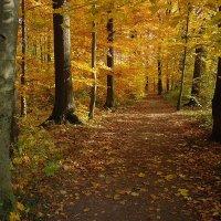Когда осень радует... :: Boris Alabugin