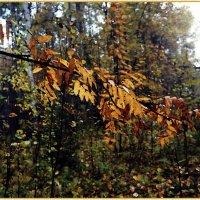 Про осень.. :: Любовь Чунарёва