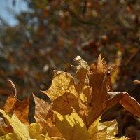 Осенний лист :: Татьяна Кретова