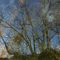 Гляжу в озёра синие... :: Юрий Поляков