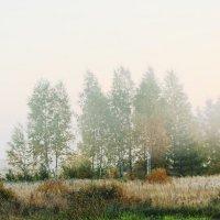 Морозное осеннее утро, туман,иней :: Damir Si