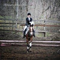 конный спорт :: Дарья Петренко