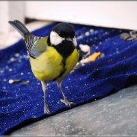 моё! :: linnud