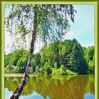 Береза над водой :: Лидия (naum.lidiya)