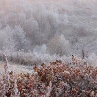 Туманный иней :: Ната Волга