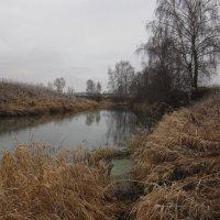 отражение берёзы в реке :: Николай Черонов