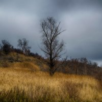 Дерево у берега :: Aine Lin