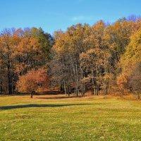 Осенний лес. :: *MIRA* **