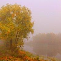 Утро туманное :: Эркин Ташматов