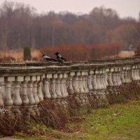 Вороны и осень :: Елизавета Вавилова