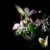 Ночные цветы :: Петр Мерзляков