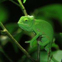 Зелёненький он был :: Alexander Andronik