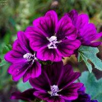 Осенние цветы :: Olga Vitman