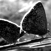 Летняя любовь :: Владимир Шешуков