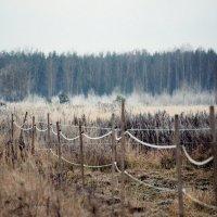 Пастух для лошадей :: Кристина Плавская