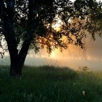 Утро в лесостепи :: николай матюшенков
