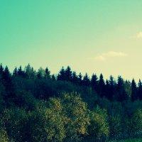 лес :: Anastasiya Shvezcova