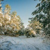 первый снег предзимья :: Андрей ЕВСЕЕВ