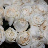 Белые розы :: Людмила