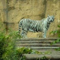 Зоопарк. Москва. :: Лариса *