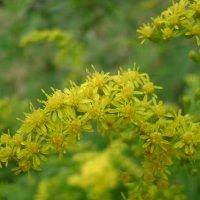 Жёлтые цветы :: Анатолий