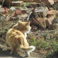 бойцовый кот :: tgtyjdrf