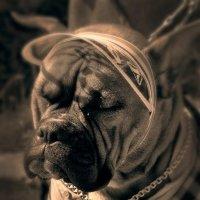 Собачья дрема :: Цветков Виктор Васильевич