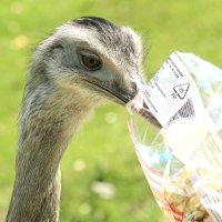 У тебя там попкорн ? - давай :: Alexander