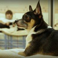 Собака! :: Дмитрий Чистопольских