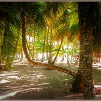 На острове Саона :: Андрей Качин