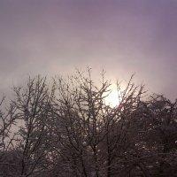 Зимнее солнце над садом :: BoxerMak Mak