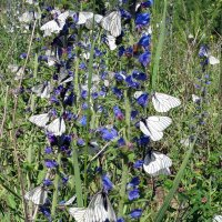 Бабочки прилетели! :: Людмила (Руца)