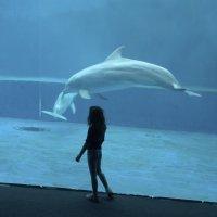 Девочка и дельфин :: Марина Лучанская