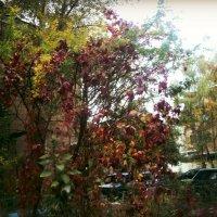 Осень славная художница, очень любит рисовать... :: Ольга Кривых