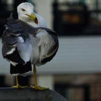 Чайка :: Лилия Гиндулина