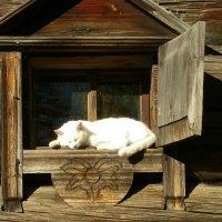 Я на солнышке лежу... :: Святец Вячеслав