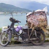 Средство для перевозки поросят на рынок. Поросята живые. :: Cергей Павлович