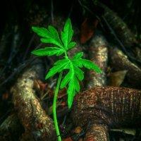 Причуды природы :: Ron Леви