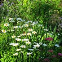 Летним утром в саду... :: Тамара (st.tamara)