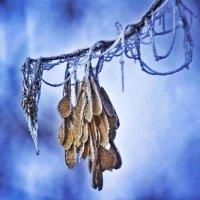 Первые заморозки... :: Svetlana Sneg